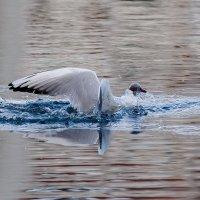 Старт из под воды :: Павел Myth Буканов