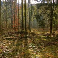 Вечер в лесу :: Евгений Леоненко