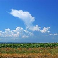 Горозовые облака над полем.... :: Татьяна Гордеева