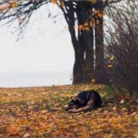 / Одиночество - сволочь ... / :: Влад Соколовский