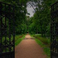 в старом парке :: Ирэна Мазакина