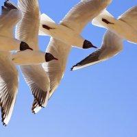 seagull 2 :: swa _