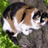 Кошка :: Татьяна Ямкова