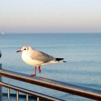 Утро на море :: Елена Кудинова