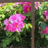 Цветы :: Алина Троицкая