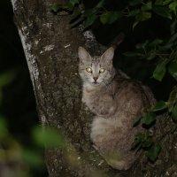 Кошка :: Михаил Танин
