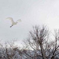 Весна прилетела :: Андрей Лаштур