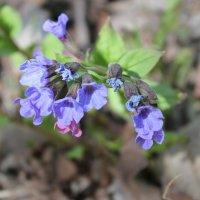 Растение :: Артем Калашников