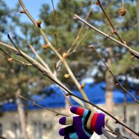 Весна пришла... :: Юлия Петлякова