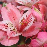цветы :: Евгения Иванова