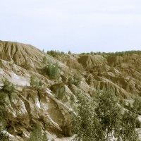 в песках :: Яков Реймер