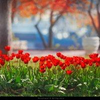 Посвещается Дню Города в Севастополе! :: Алексей Латыш