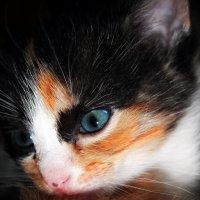 Милый Котя :: Юлия Артамонова