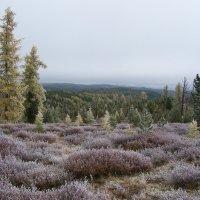 Вид с перевала Улаганский :: Sergey Oslopov