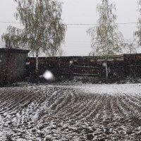 Майский снегопад :: Анна Захарова