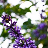Цветок :: Андрей Власик
