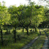 Дорога в лесу :: Андрей Власик