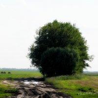 в деревне... :: Александр Юрийчук