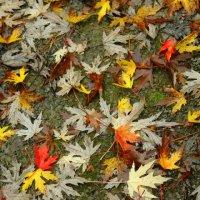 Осень :: Роман Королёв