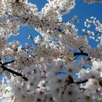 Весна :: Роман Королёв