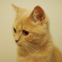 cat :: Александр Ан