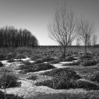 В поле. :: Юрий Кущ