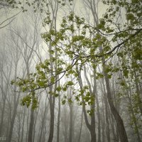 Туман :: виктория иванова