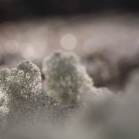 Мини-дерево :: Виктория Нарчук