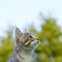 Котёнок на столбике :: Александр Лядов