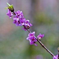 Запахло весной :: Евгений Леоненко