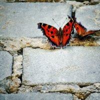 Бабочки :: Svetlana Sneg