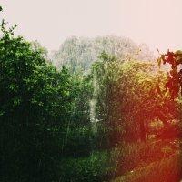 дождь :: Анастасия Рейн