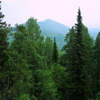 Лес :: Иван Котляров