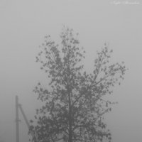 Что кроется в тумане? :: Вячеслав Гудзенко