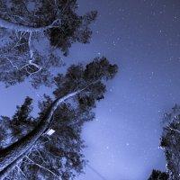Зимнее небо :: Алексей Синельников