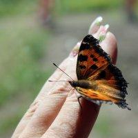 Душа на пальцах :: Наталья Вельди