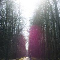 Весенний лес :: Анна Боярченкова