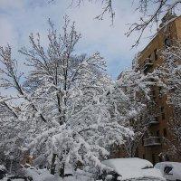 Снег и деревья :: Galina Kazakova