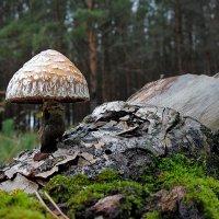 Там, где живут гномы :: Николай Белавин