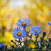 Осенний цвет :: Елена Матвеева