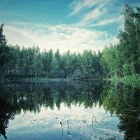Пруд :: Svetlana Sneg