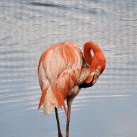Розовый фламинго. :: Татьяна Бобкова