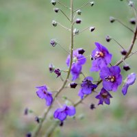 сказочные цветы :: Яна Панасюк