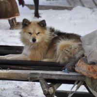 Верный друг... :: Владимир Кашмов