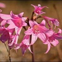 Wildflowers :: Yanina Gotsulsky