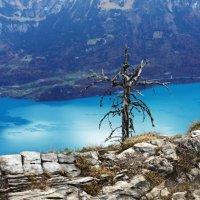 деревья умирают стоя :: Elena Wymann