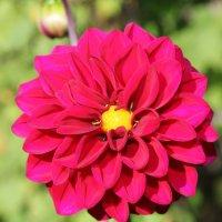 цветок :: Сергей