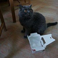 Коробка для кота :: Eugene *
