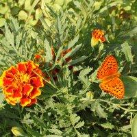 Летающий цветок :: Николай Масляев