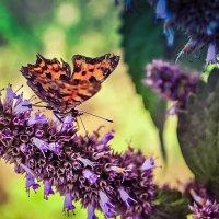 Бабочка 2 :: Юлия